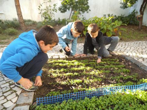 Limpeza dos canteiros (remoção de ervas daninhas)