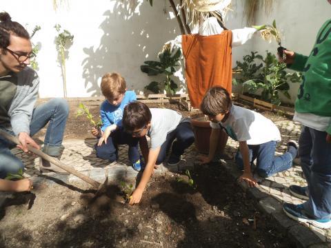 Na preparação dos canteiros: Plantação das beringelas
