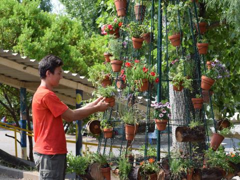 Novas plantas chegaram e novos vasos adornaram!