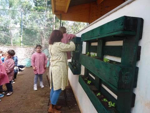 Plantação de alfaces