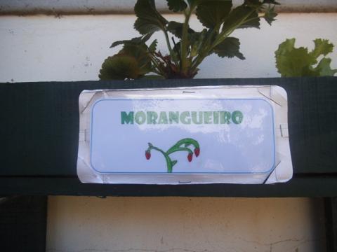Identificação da plantação - Morangueiro