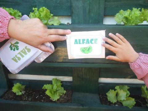 Identificação da plantação - Alface
