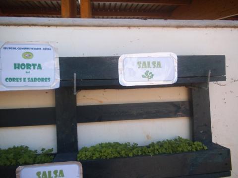 Identificação da plantação - Erva Aromática - Salsa e identificação da horta