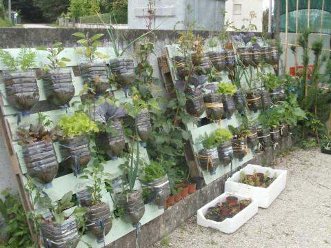 A horta depois de regada e retirados os caracóis.