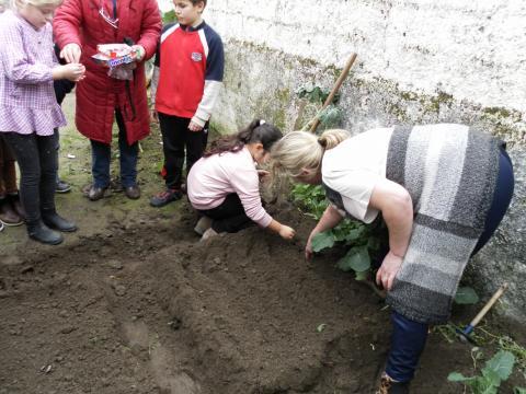 Mães ajudam a semear favas e ervilhas.