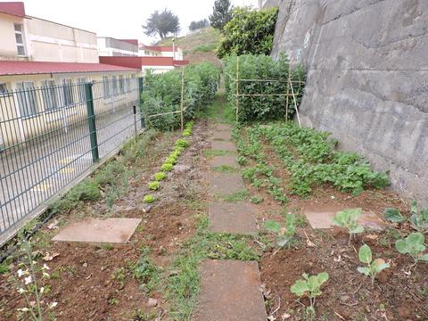 Panorâmica geral da horta.