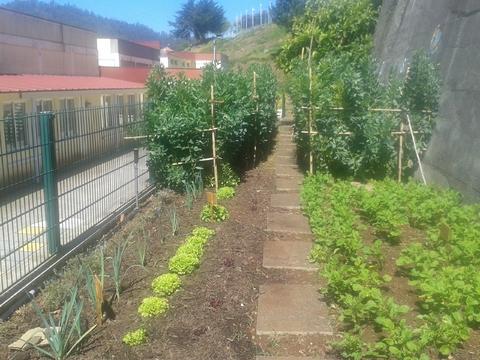 Cultivo de favas, alho francês, beterraba, alfaces e batatas.