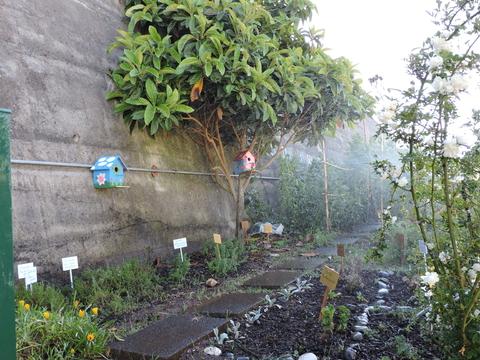 Canteiro de plantas aromáticas a ser regado com o sistema de aspersão.