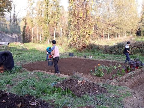 Primeiras sementeiras e plantações na horta bio - talhão de linho e variedades de couve (penca e coração).
