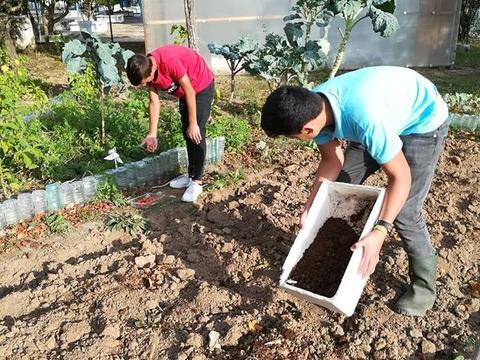 Preparação do terreno com colocação de borras de café.