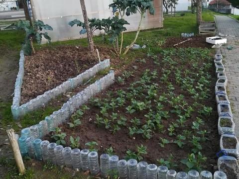 Um dos canteiros com favas, ervilhas e couves em crescimento.
