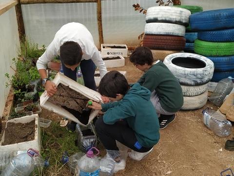 Preparação de garrafões com terra para se semear espinafres e ervas aromáticas.