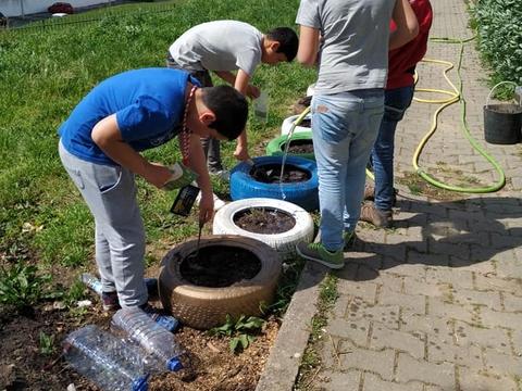 Conclusão da plantação de várias plantas nos pneus.