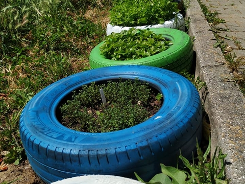 Pormenor de várias plantas em desenvolvimento no pneus velhos pintados.
