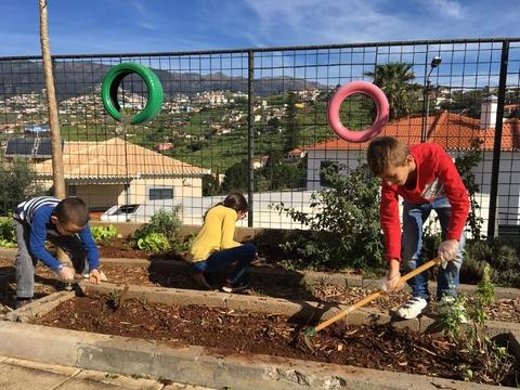 Manutenção da horta: Os cuidados necessários para manter a horta saudável.