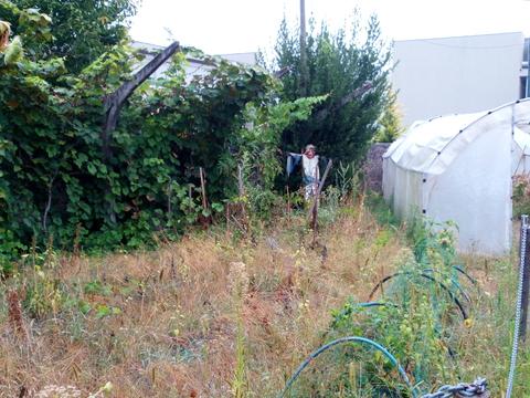 Campo de cultivo_Horta após as férias de Verão