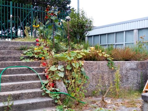 Horta de aromáticas_Canteiro onde tinham sido cultivadas várias aromáticas, agora misturadas com ervas que foram crescendo e invadindo o canteiro durante o verão
