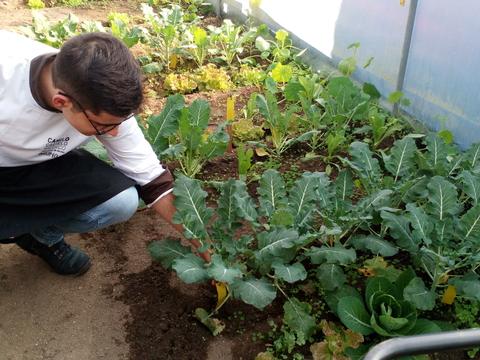 Produtos da Horta - recolha de produtos da horta por alunos do Curso profissional de Restauração e Bar