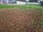 Terra mexida, pronta para plantar as favas.