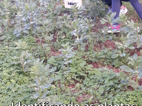 Construção e afixação de placas identificativas das plantas