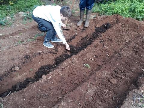 Plantando o milho