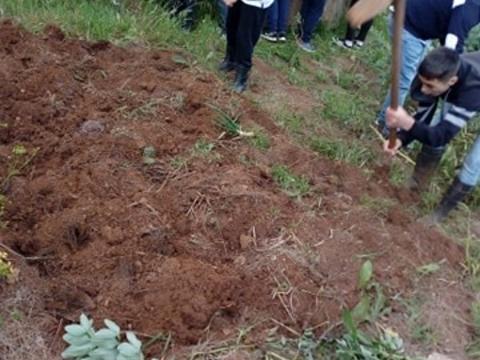 Preparando terreno para nova sementeira