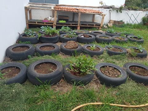 A nossa horta após o regresso das férias ao Infantário.