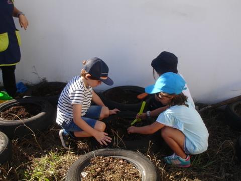 As crianças continuam a fazer a realização da mantenção da horta (retirar ervas).