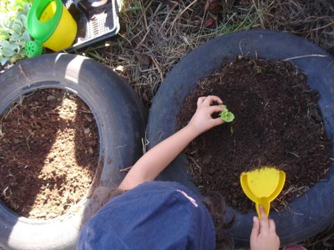 As crianças a plantar os legumes.