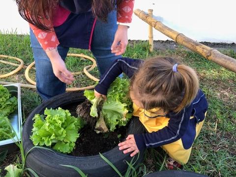 As crianças a colher os legumes que plantaram na horta.