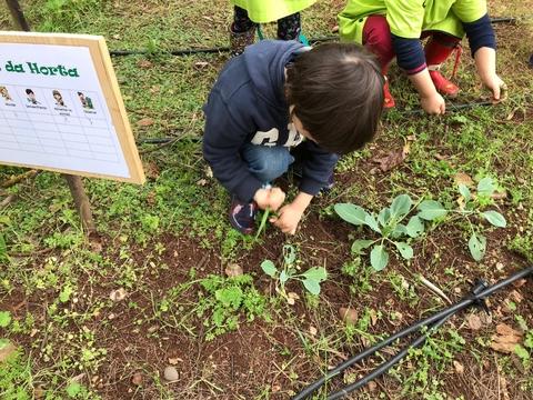 Manutenção da horta da escola