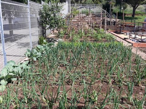Produtos hortícolas isntalados: alfaces, cebolas, Couves galegas, coentros, tomates e abóboras.