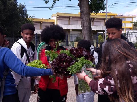 Colheita de alfaces para vender na comunidade educativa.